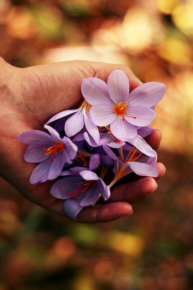 Ausgewählte Heilpflanzen für Senioren
